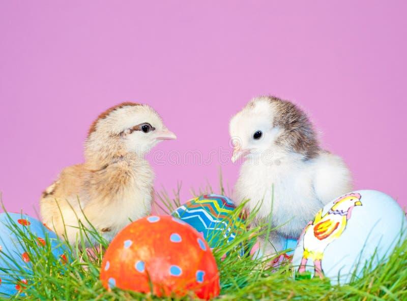Dos polluelos minúsculos de pascua en hierba fotografía de archivo