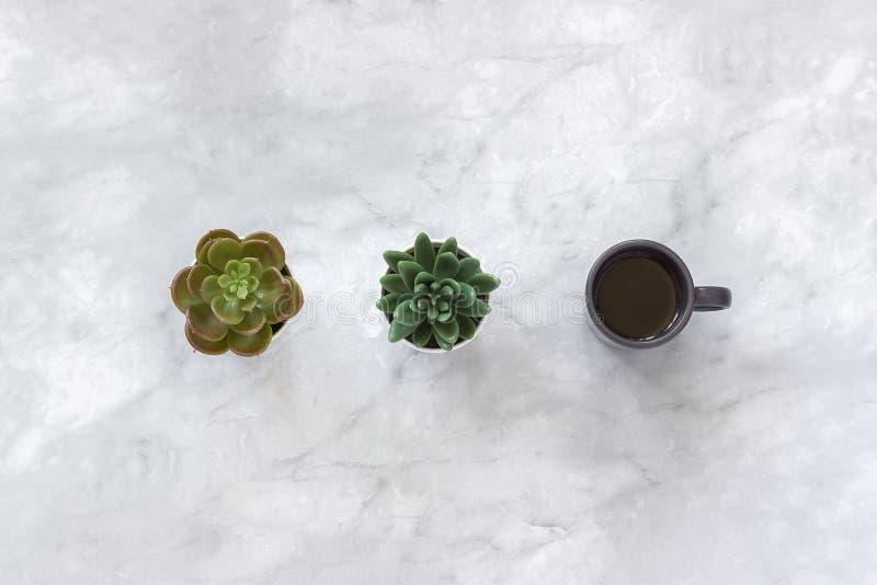 Dos potes de flores suculentos y taza negra de soporte del café en fila en el fondo de mármol de la tabla Top puesto plano del es fotografía de archivo libre de regalías