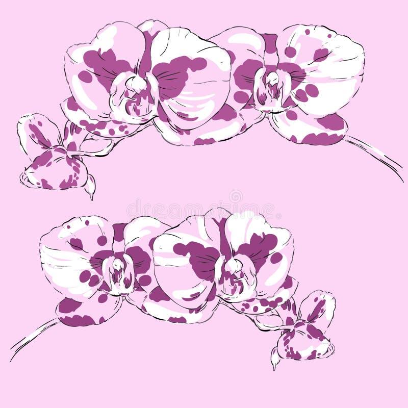 Dos puntillas de orquídeas florecientes en un fondo rosado libre illustration