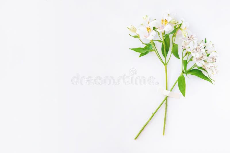 Dos ramas blancas de la flor del alstroemeria grabadas en el fondo blanco imagen de archivo libre de regalías