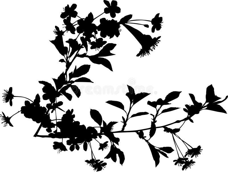 Dos ramificaciones negras del cerezo libre illustration