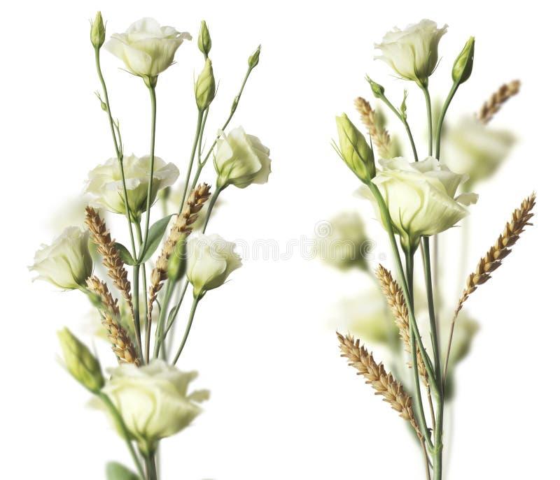 Dos ramos de la flor sobre el fondo blanco imagen de archivo libre de regalías