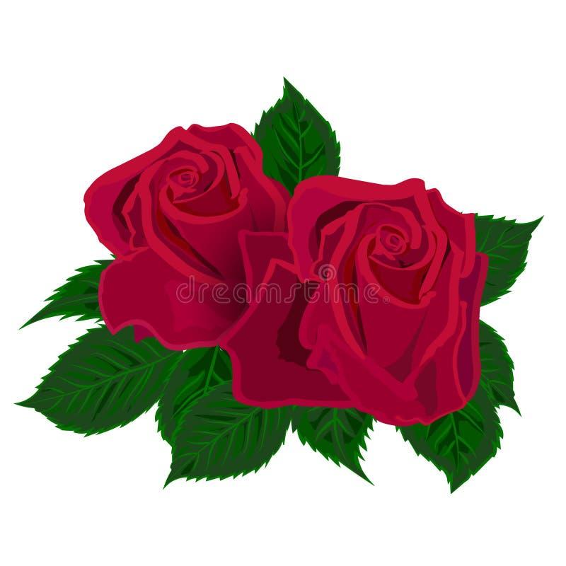 Dos rosas rojas en el fondo blanco stock de ilustración