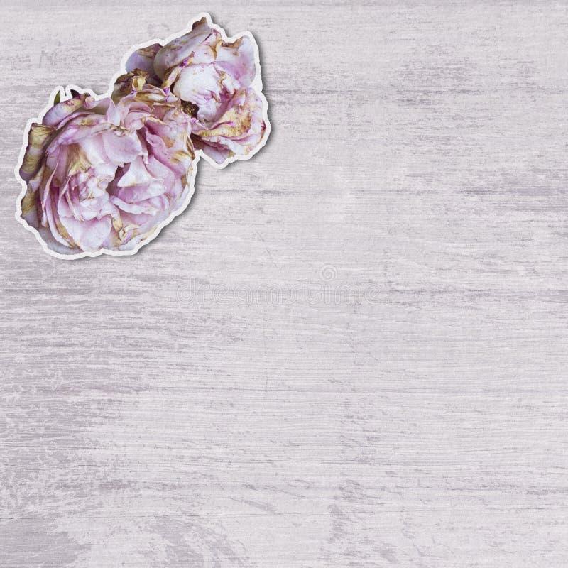Dos rosas rosadas cortadas y pegar en una superficie de madera apenada imagen de archivo libre de regalías