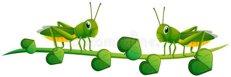 Dos saltamontes en vid verde ilustración del vector