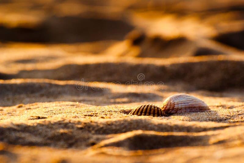 Dos seashells en la arena de oro fotografía de archivo