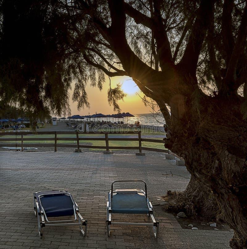 Dos sillas de playa azules debajo de un árbol en la puesta del sol fotos de archivo