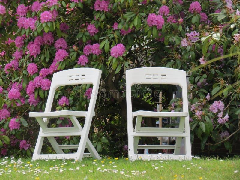 Dos sillas y un arbusto de lila fotografía de archivo