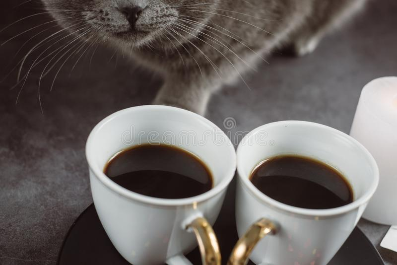 Dos tazas de café, de gato hermoso gris, de vela y de corazón en fondo oscuro fotografía de archivo libre de regalías