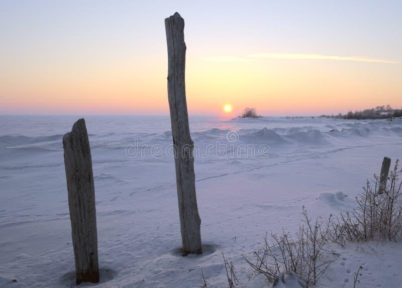 Dos troncos de árbol en el fondo de la puesta del sol del invierno fotos de archivo libres de regalías