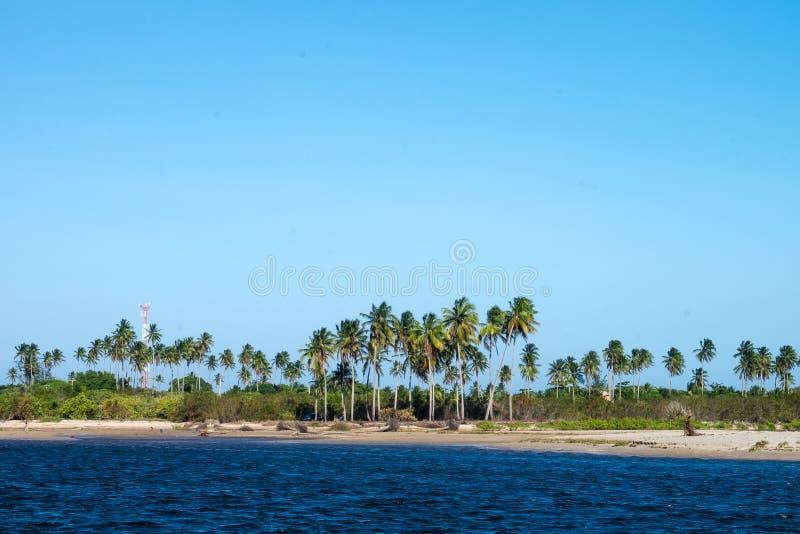 Dos van Saomiguel Milagres - Alagoas, Brazilië royalty-vrije stock foto