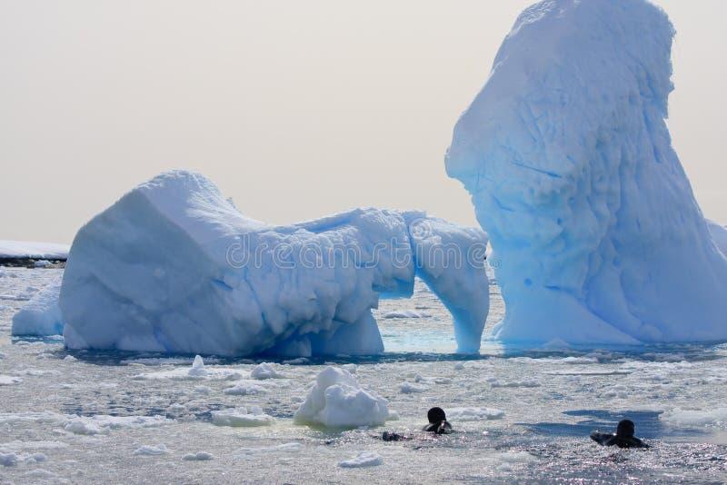 Dos zambullidores en el hielo fotografía de archivo libre de regalías