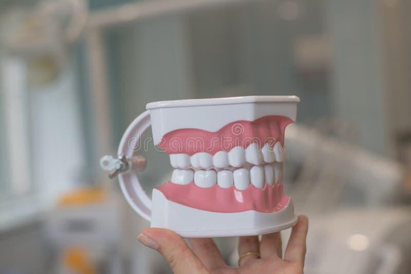 Doskonale prości zęby Szczęka model, zamyka up Brasy na zębach zęby modelują dentures, Stomatology spotkanie stomatologiczny obraz royalty free