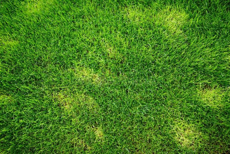 Doskonale skoszony świeży ogrodowy gazon w lecie Zielona trawa z sunspots obraz royalty free