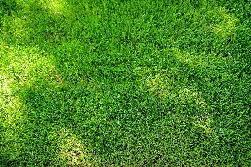 Doskonale skoszony świeży ogrodowy gazon w lecie Zielona trawa z sunspots obrazy stock