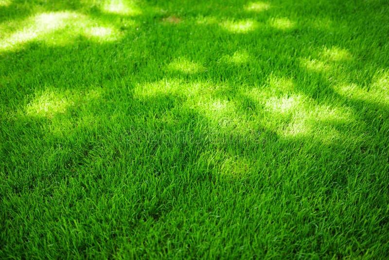 Doskonale skoszony świeży ogrodowy gazon w lecie Zielona trawa z sunspots zdjęcia royalty free