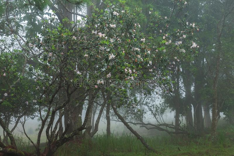 Doskonalić atmosfera las tropikalny z kwiatu polem, sosna i uczymy się zdjęcie royalty free