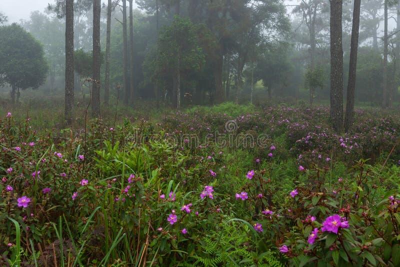 Doskonalić atmosfera las tropikalny z kwiatu polem, sosna i uczymy się obrazy royalty free