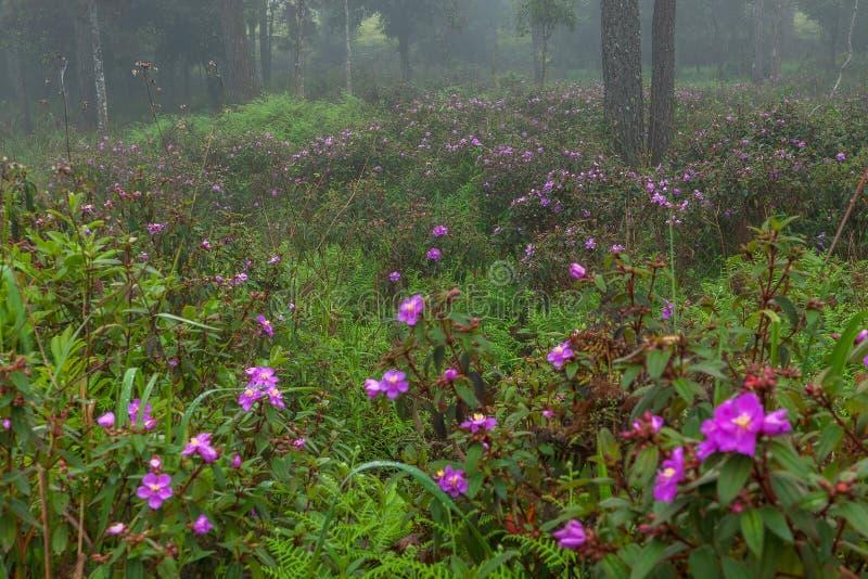 Doskonalić atmosfera las tropikalny z kwiatu polem, sosna i uczymy się fotografia stock