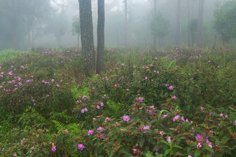 Doskonalić atmosfera las tropikalny z kwiatu polem, sosna i uczymy się zdjęcia royalty free