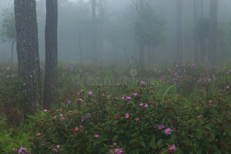 Doskonalić atmosfera las tropikalny z kwiatu polem, sosna i uczymy się obrazy stock