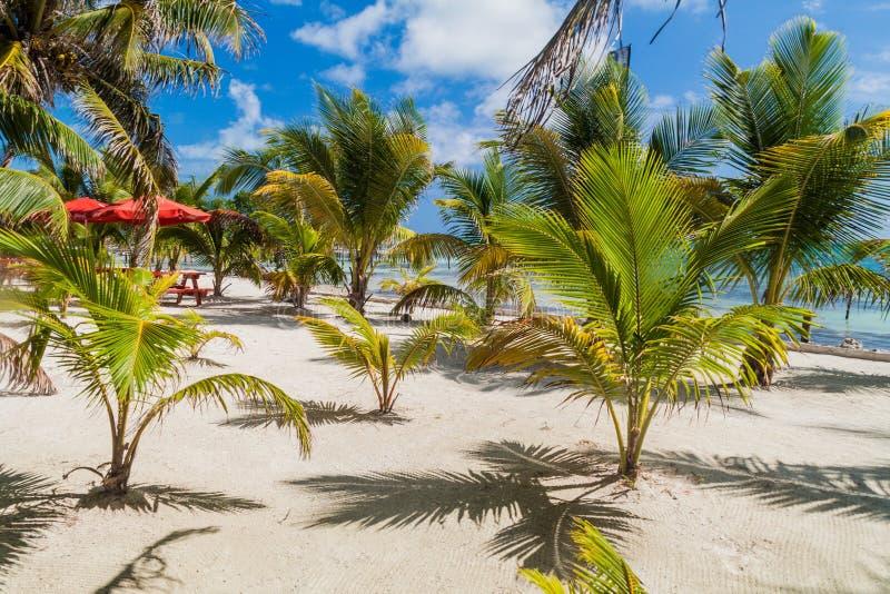 Doskonalić plażę przy Caye doszczelniacza wyspą w Bel obrazy royalty free