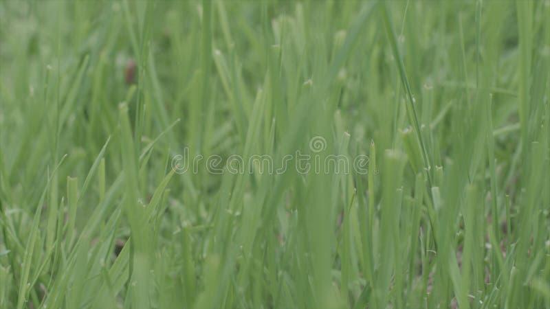 Doskonalić zielonego tło świeżą trawą zapas zielony środowisk naturalnych zdjęcie stock