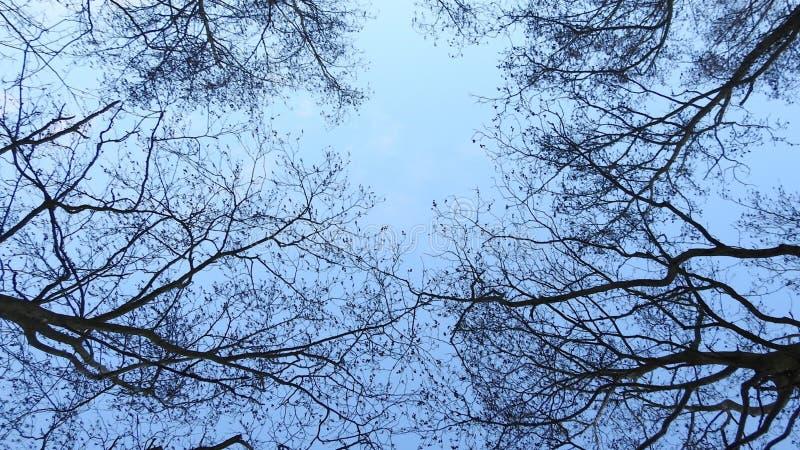 Dosséis do ³ do 🌠da árvore fotos de stock