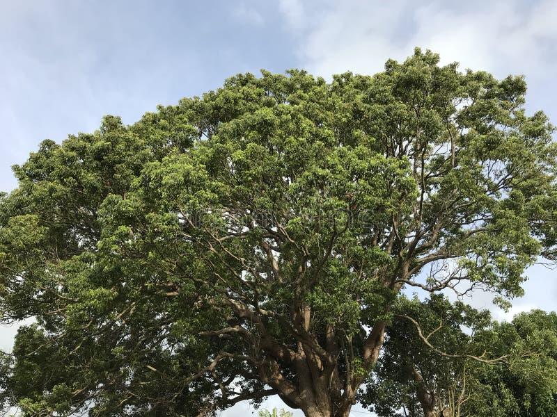 Dossel de árvore fotos de stock royalty free