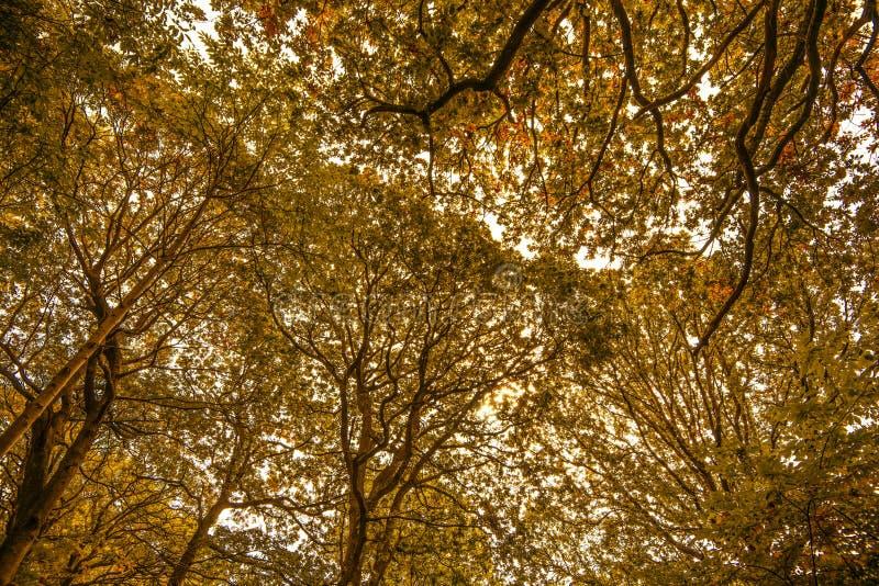 Dossel de árvore bonito na reserva natural de madeira dianteira, Crowhurst, Sussex do leste, Inglaterra foto de stock