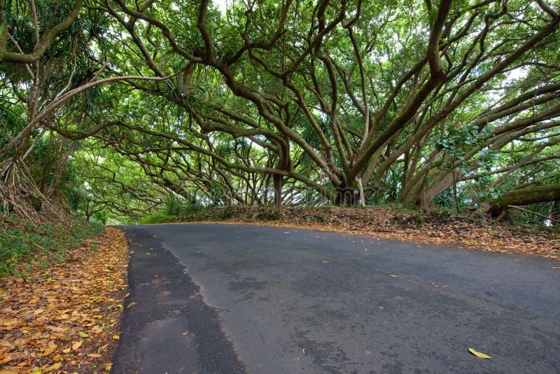 Dossel de árvore tropical sobre a estrada foto de stock royalty free