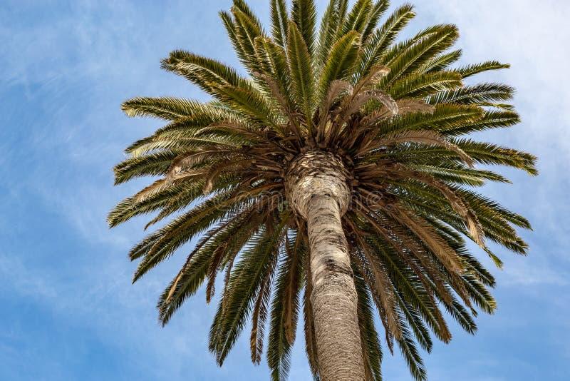 Dossel decorativo da palma nas ruas de Los Angeles fotos de stock