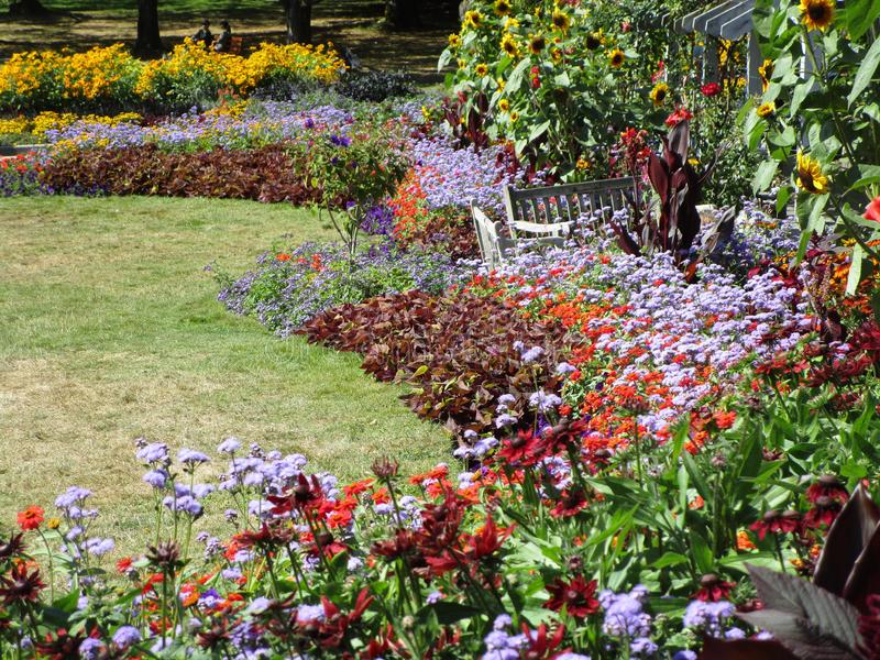 Dosyć kolorowa rozmaitość lato kwitnie przy Stanley parka Odwiecznie ogródem, Vancouver, Kanada, 2018 obrazy stock