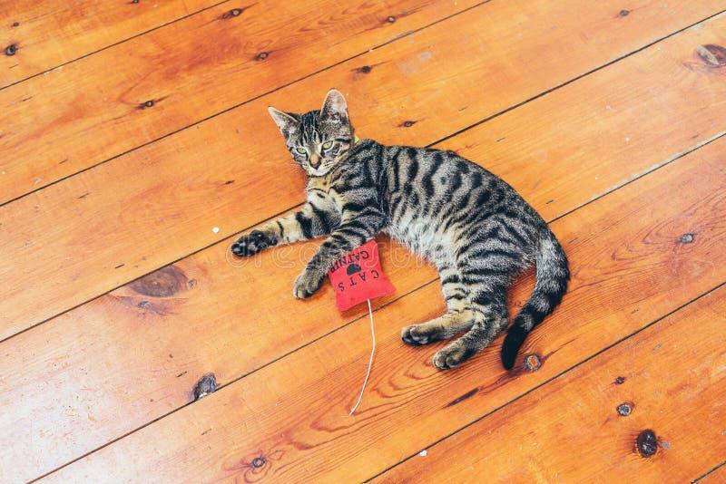 Dosyć siwieje pasiastego kota lying on the beach na drewnianej podłoga zdjęcie stock