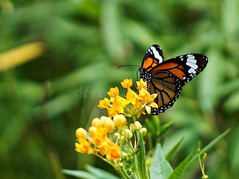Dot Butterfly mit kleiner gelber Blume stockbilder