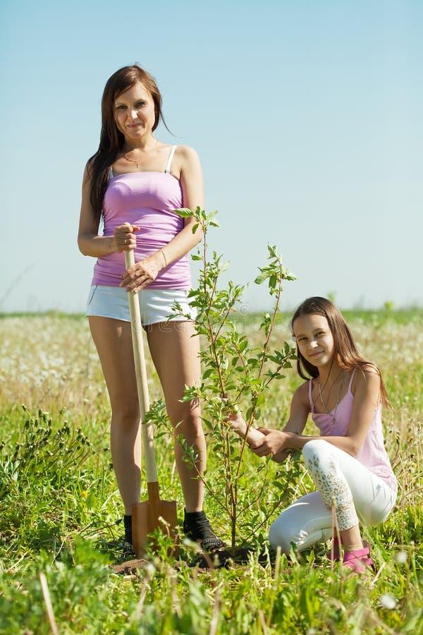 dotter som nollställer den teen treekvinnan royaltyfri foto