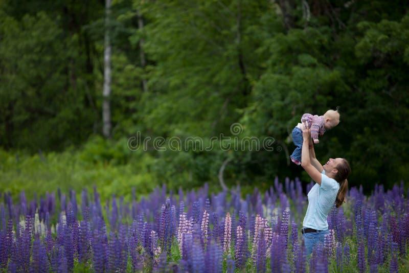 dotterfältet blommar lupinemodern royaltyfri foto