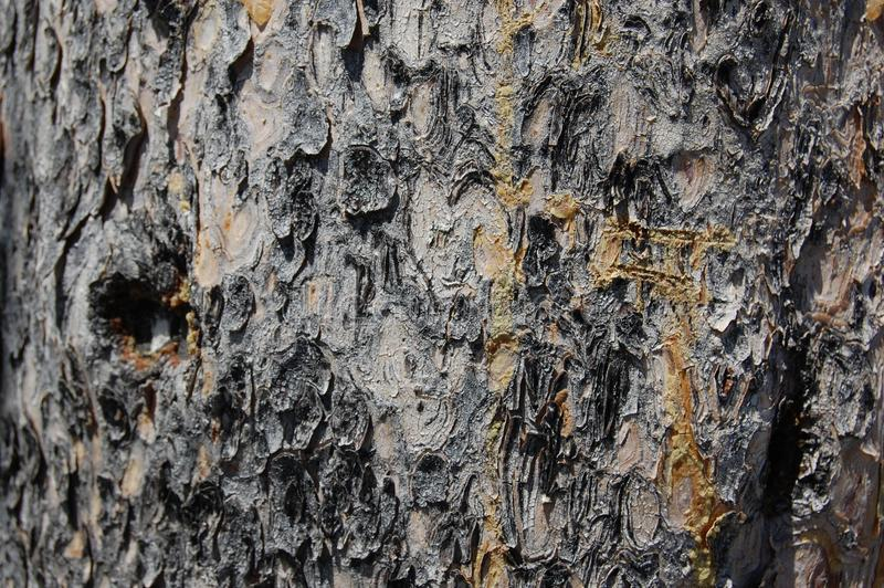 Dotykowa popielata drzewna barkentyna, textured, naturalna szorstka powierzchnia, obraz royalty free