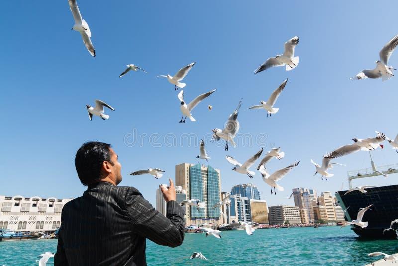 DOUBAI, VERENIGDE ARABISCHE EMIRATEN - MAART 2019: de mens voedt vogels naast de kreek van Doubai royalty-vrije stock foto's