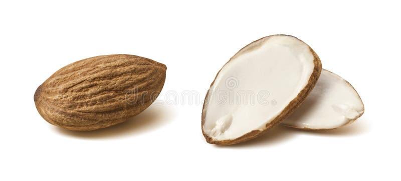 Double almond nut half isolated on white background stock photo