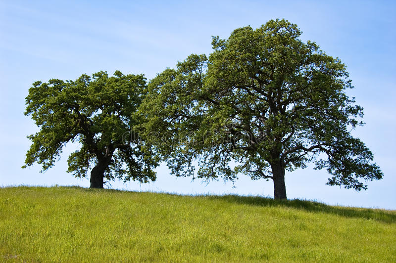Double arbre images stock
