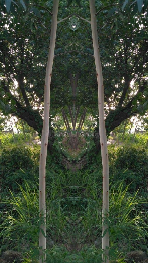 Double arbre images libres de droits