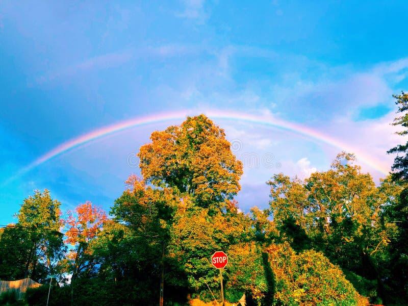 Double arc-en-ciel coloré avec les arbres d'érable et le ciel bleu photos libres de droits