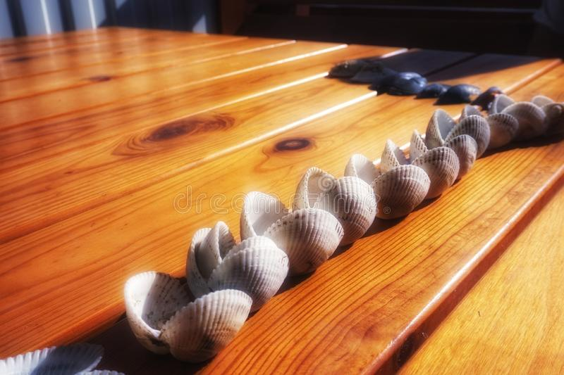 Double clams of mollusks lie on the table, lined up. Double clams of mollusks lie on the table, lined up royalty free stock image