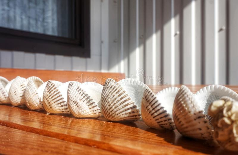 Double clams of mollusks lie on the table, lined up. Double clams of mollusks lie on the table, lined up royalty free stock photos