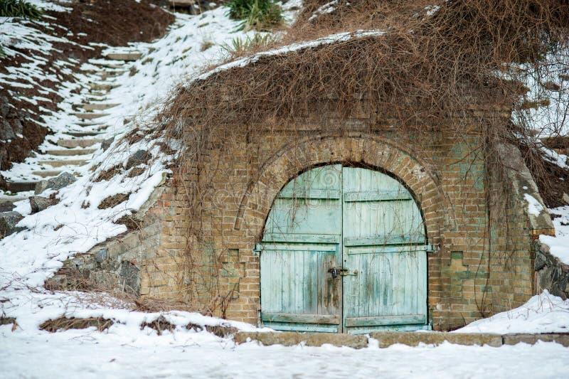 Double doors covered with ivy. vintage blue garden gate door in a green hedge row. rustic wooden door of an underground old- stock image