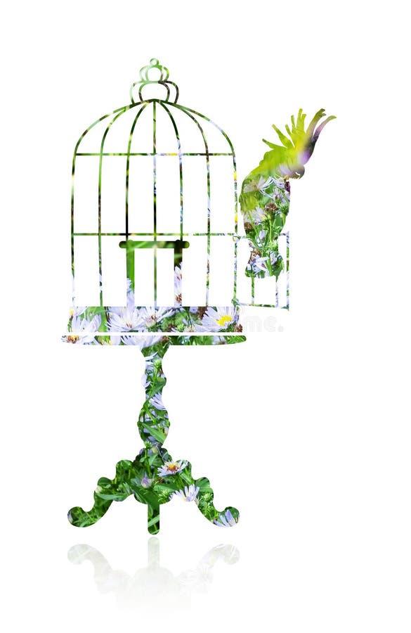 Double exposition Cage à oiseaux et perroquet illustration libre de droits