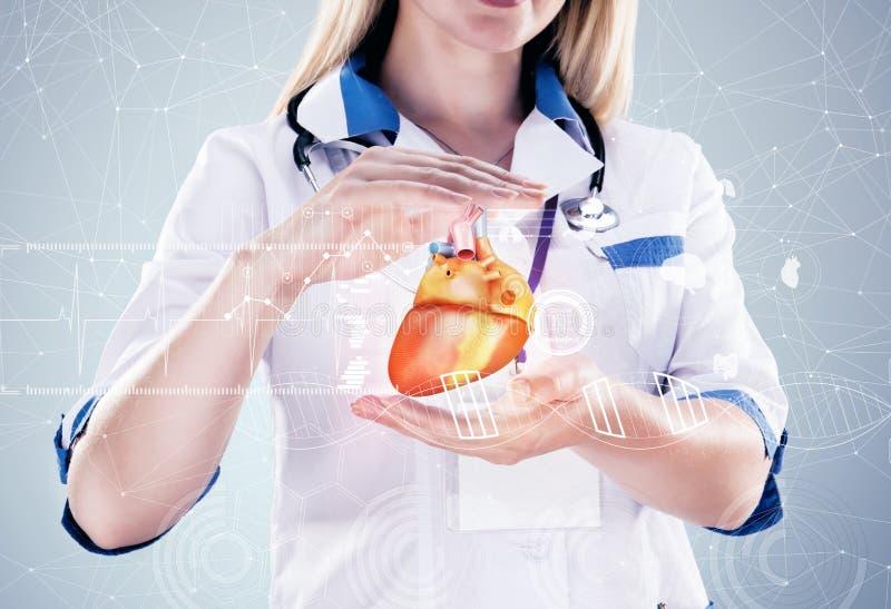 Double exposition Docteur tenant les organes humains et le x28 ; heart& x29 ; , fond gris image stock
