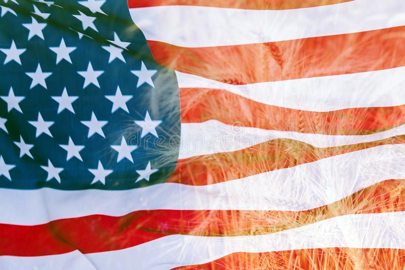 Double exposure with the american flag and  wheat. Double exposure with the american flag and beautiful natural wheat, 4th, july, agriculture, background, blue royalty free stock photos