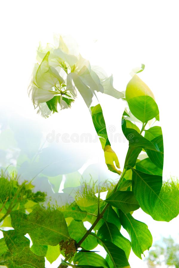 Double exposure of an elegant girl leaning back combined with photograph of bright green tropical plants with sun shining through royalty free stock photography
